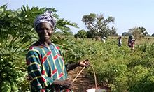 Photo of a woman farming