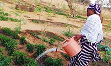 Image of a woman watering her crops with a large watering can.